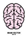 """脑子vector†""""股票例证†""""股票例证文件 库存例证"""