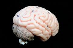 头脑的 图库摄影