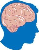 头脑的 库存图片