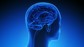 脑部扫描方法学(使成环) 库存图片