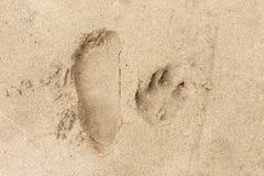 脚印和爪子印刷品在沙子 库存图片