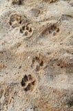 脚印宠物 库存图片