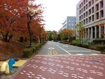 脚印斑马线和五颜六色的树在路 免版税库存图片