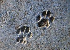 脚印猫 免版税库存照片