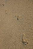 脚印铺沙织地不很细 库存照片
