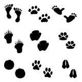 脚印集 图库摄影