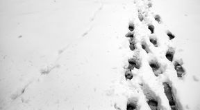 脚印雪时间冬天 在第一雪的脚印 印  库存图片