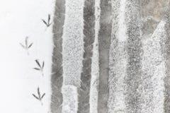 脚印雪时间冬天 在第一雪的脚印 版本记录  免版税图库摄影