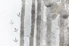 脚印雪时间冬天 在第一雪的脚印 版本记录  库存照片
