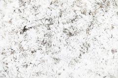 脚印雪时间冬天 在第一雪的脚印 版本记录  图库摄影
