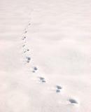 脚印雪 免版税图库摄影