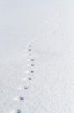 脚印鼠标 免版税库存照片