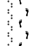 脚和狗爪子 库存照片