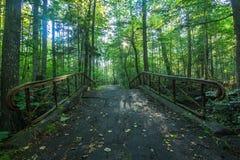 脚桥梁在一个密集的森林里 图库摄影
