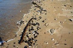 脚步和壳在沙子在海滩 免版税库存照片