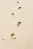 脚步和金黄沙子 库存照片