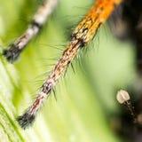 脚蜘蛛本质上 2009朵超级花宏观的夏天 免版税库存照片
