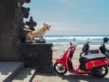 脚踏车停放在海滩的寺庙在巴厘岛印度尼西亚 免版税库存照片