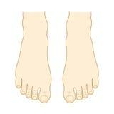 脚面和脚趾 向量例证