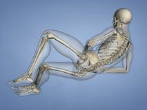 脚, 3D趾骨模型 库存照片