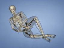 脚, 3D趾骨模型 免版税库存图片