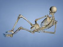 脚, 3D趾骨模型 免版税库存照片