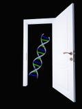 脱氧核糖核酸和开放门道入口 免版税库存照片