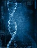 脱氧核糖核酸的数字式例证 免版税库存照片