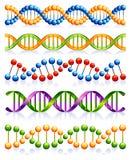 脱氧核糖核酸 免版税库存图片