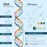 脱氧核糖核酸Infographics集合 免版税库存照片