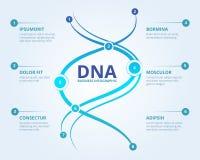 脱氧核糖核酸infographics 螺旋与地方的人类生物学结构传染媒介医疗科学概念您的文本的 向量例证