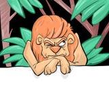 脾气坏的狮子 库存照片