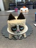 脾气坏的猫蛋糕 免版税库存照片