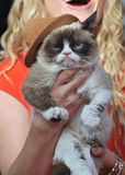 脾气坏的猫 库存图片