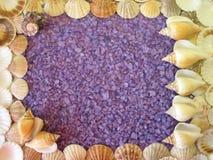 腌制槽用食盐和壳框架 免版税图库摄影