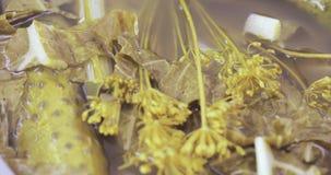 腌汁黄瓜用莳萝 影视素材