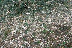 腐土背景 与圣诞树针的锯木屑在森林里 库存照片
