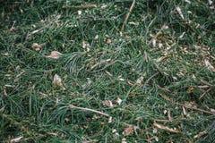 腐土背景 与圣诞树针的锯木屑在森林里 图库摄影