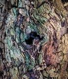 腐朽在北卡罗来纳森林的被击倒的树做惊人的纹理 免版税库存图片