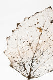 腐朽的叶子摘要 图库摄影