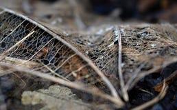 腐朽的叶子 库存图片