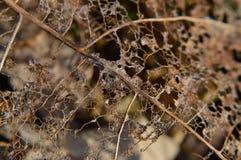 腐朽的叶子 免版税图库摄影