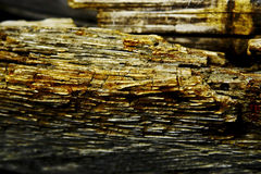 腐朽的木头 免版税图库摄影