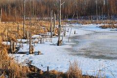 腐朽的森林池塘结构树 免版税库存照片