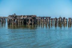 腐朽的码头打桩 免版税库存图片