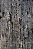腐朽的表面木材 库存图片