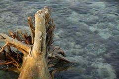腐朽的结构树 免版税库存照片