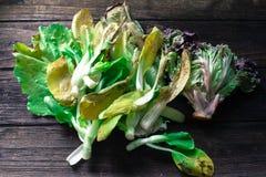 腐烂的大白菜和莴苣在木backg 库存照片