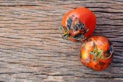 腐烂的小组在老木背景的蕃茄 图库摄影