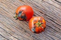 腐烂的小组在老木背景的蕃茄 免版税图库摄影